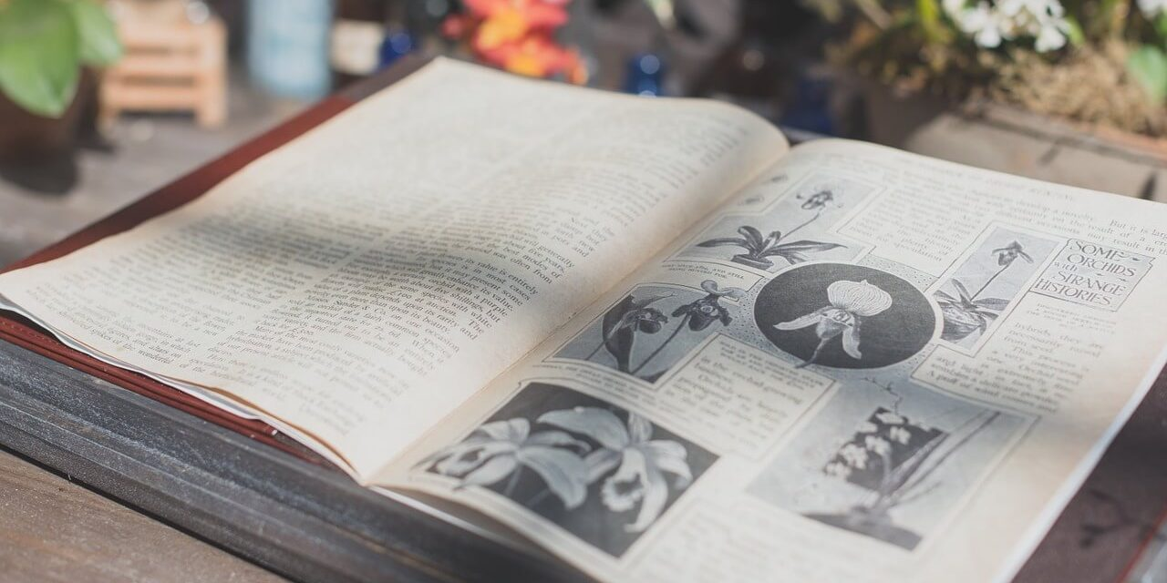 ¿Por qué debes aprender WordPress a fondo?